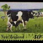New Product Quality Issue Arises From New Zealand Milk Exported To China